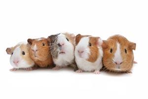 homoeopathie schulmedizin tiere Dipl. Tierärztin Halmer, Pressbaum bei Wien