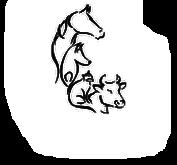 Homöopathischer Tierarzt Pressbaum bei Wien