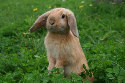kosten kastration kaninchen